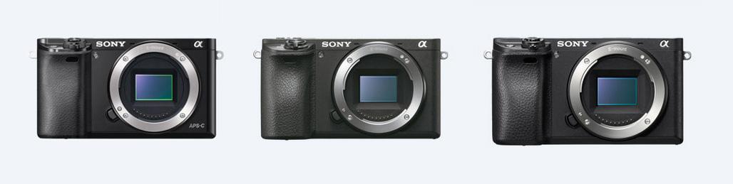 Sony a6500 w fotografii przyrodniczej, czyli bezlusterkowiec daje radę!