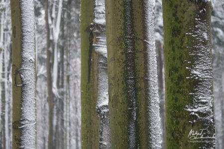 Zima w bukowym lesie