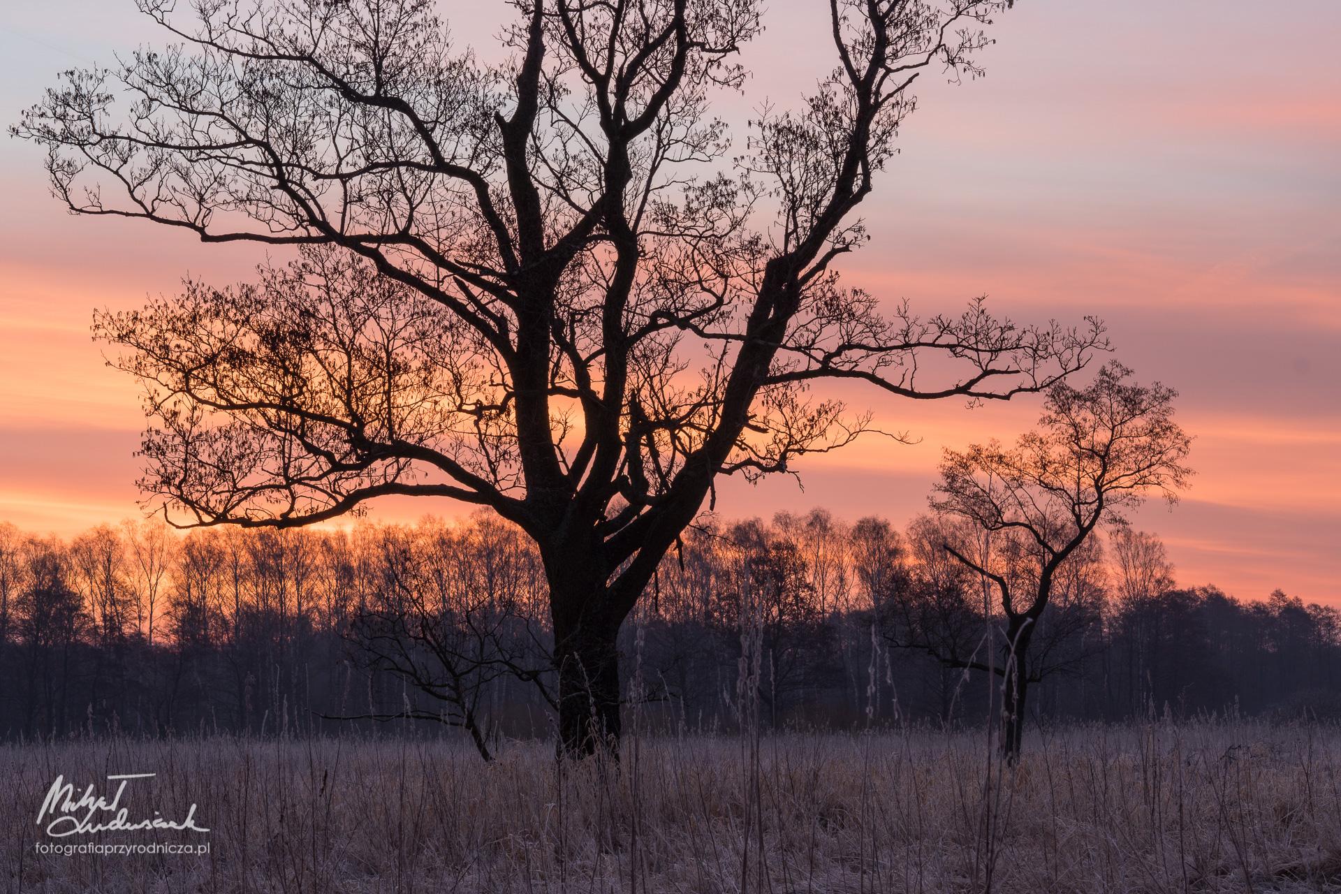 Nowe drzewa o świcie. Podejście drugie.