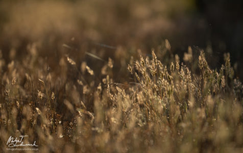Bogate życie łąki