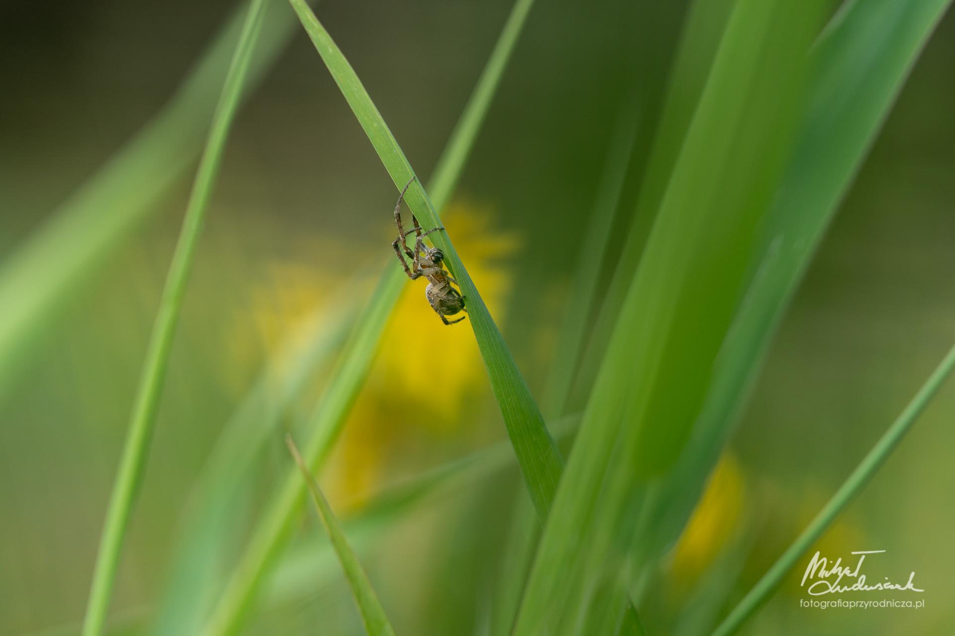 Pośród traw czai się zło
