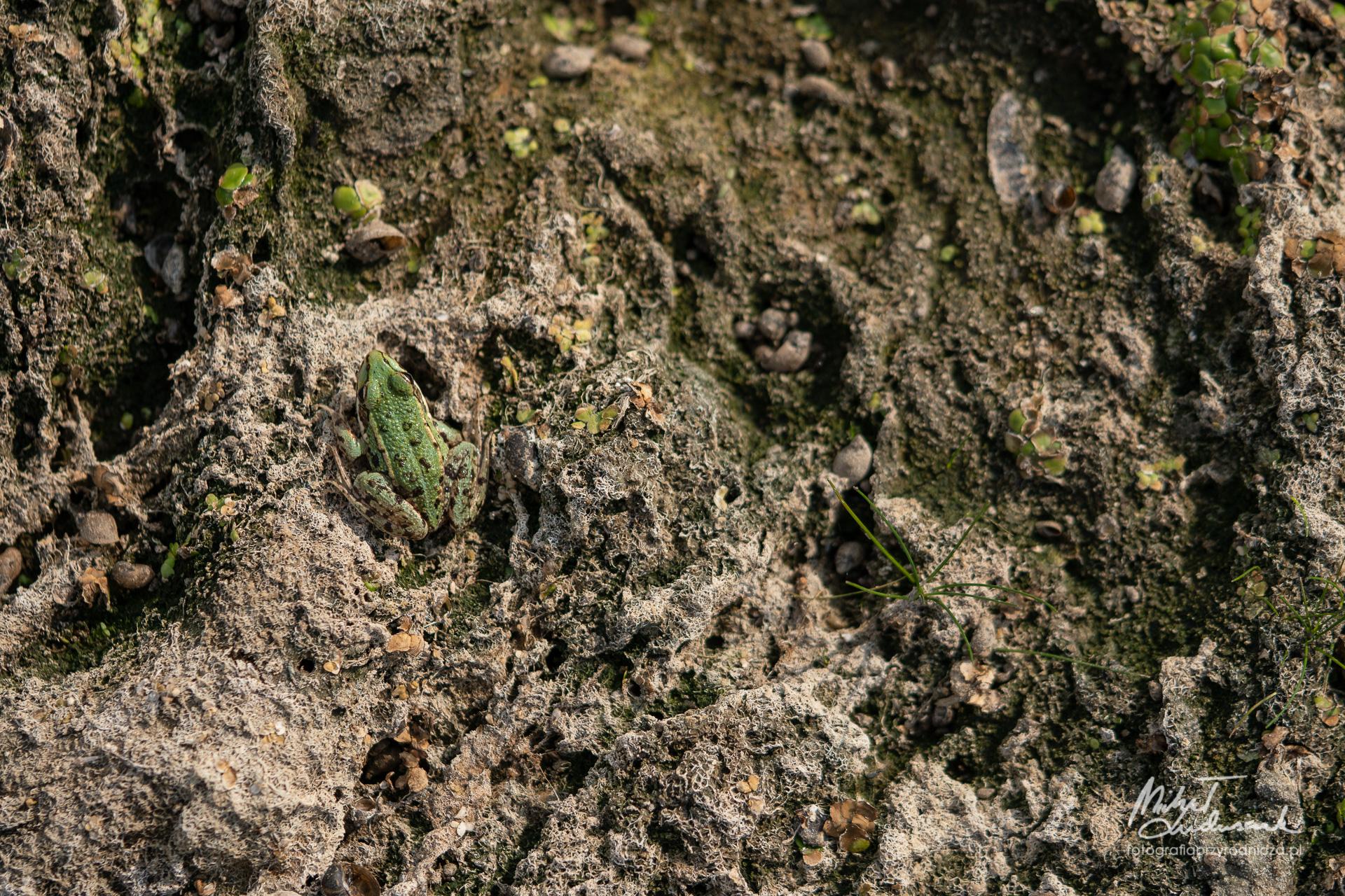 Znajdź żabkę