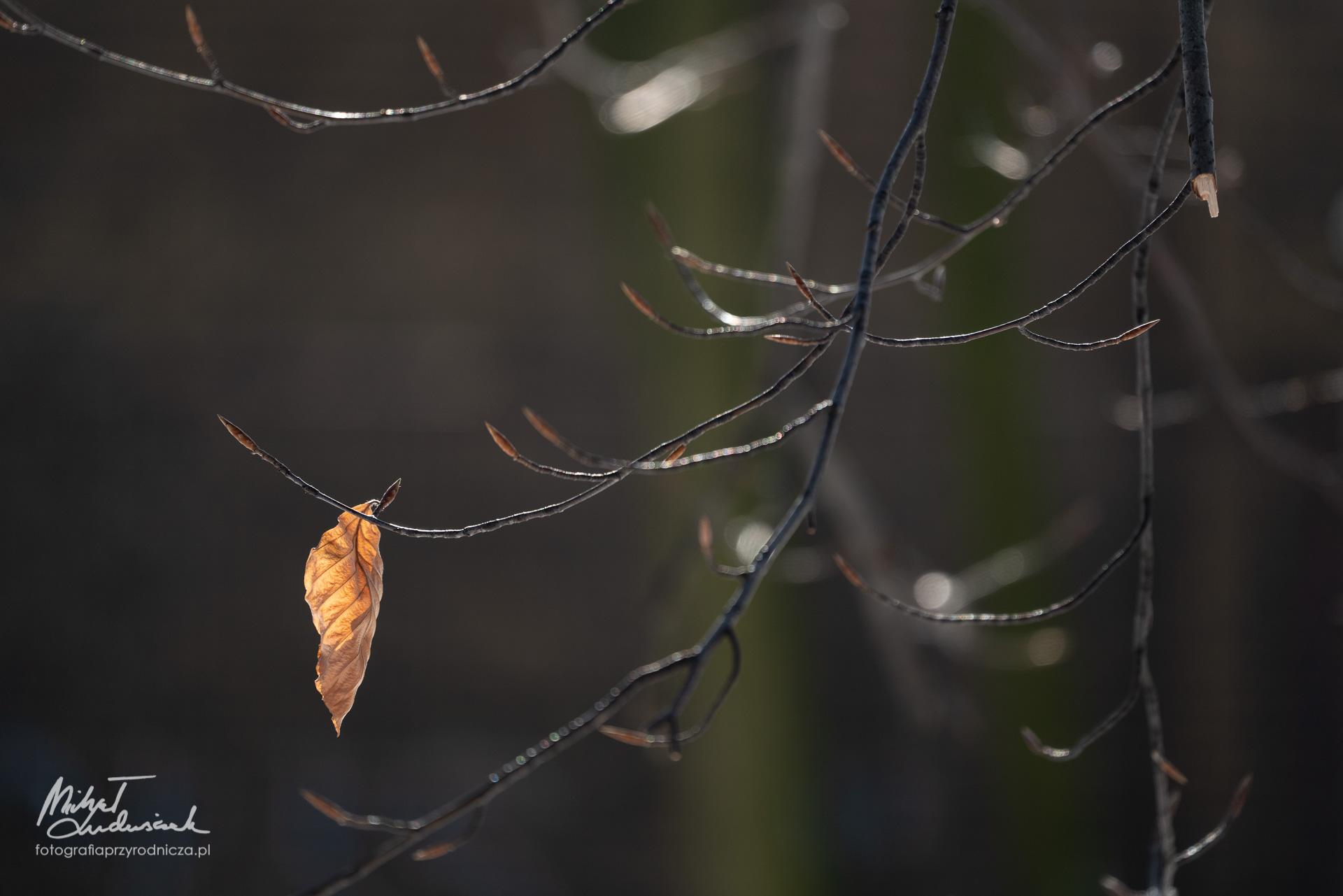 Ostatni liść