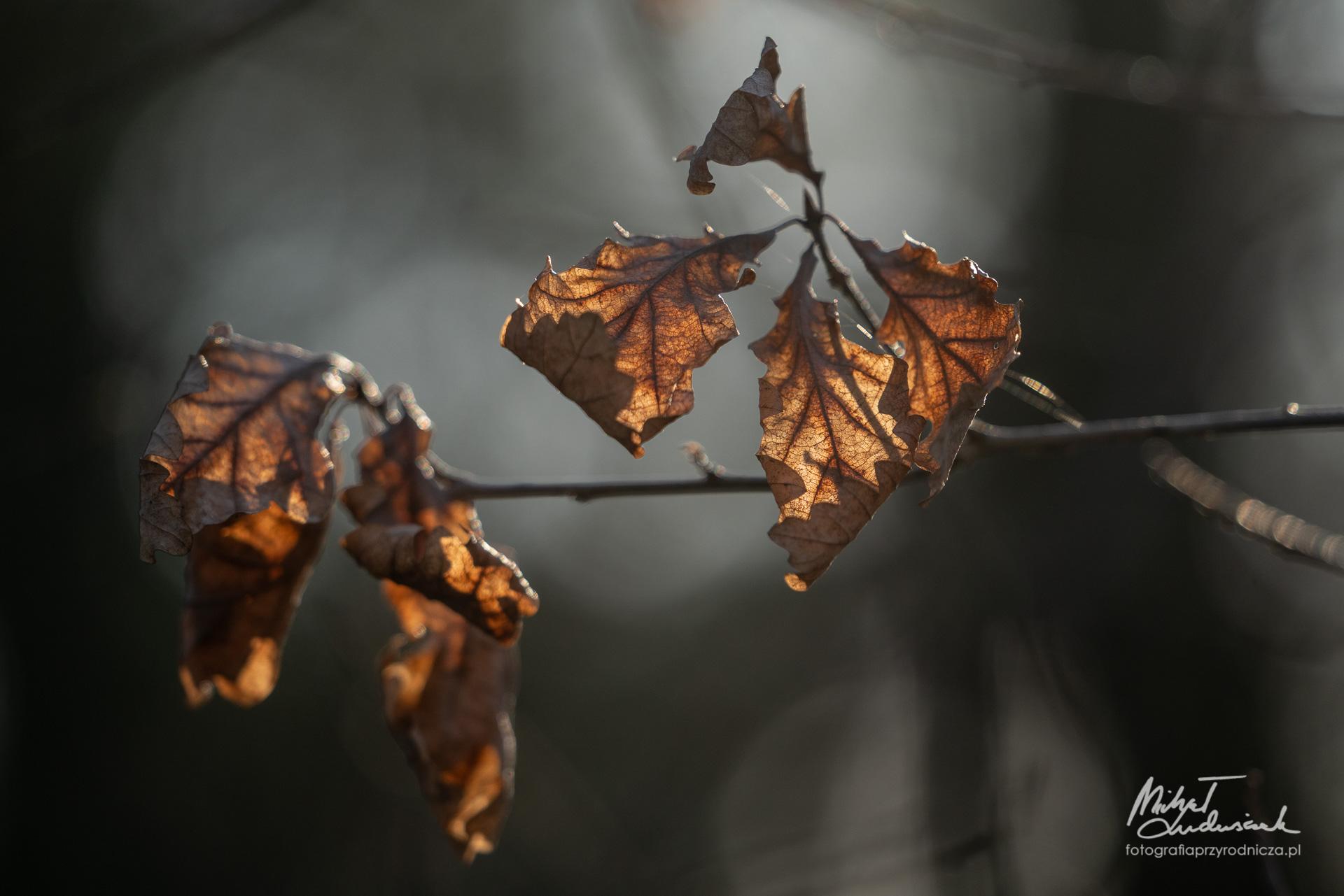 Ostatki jesieni