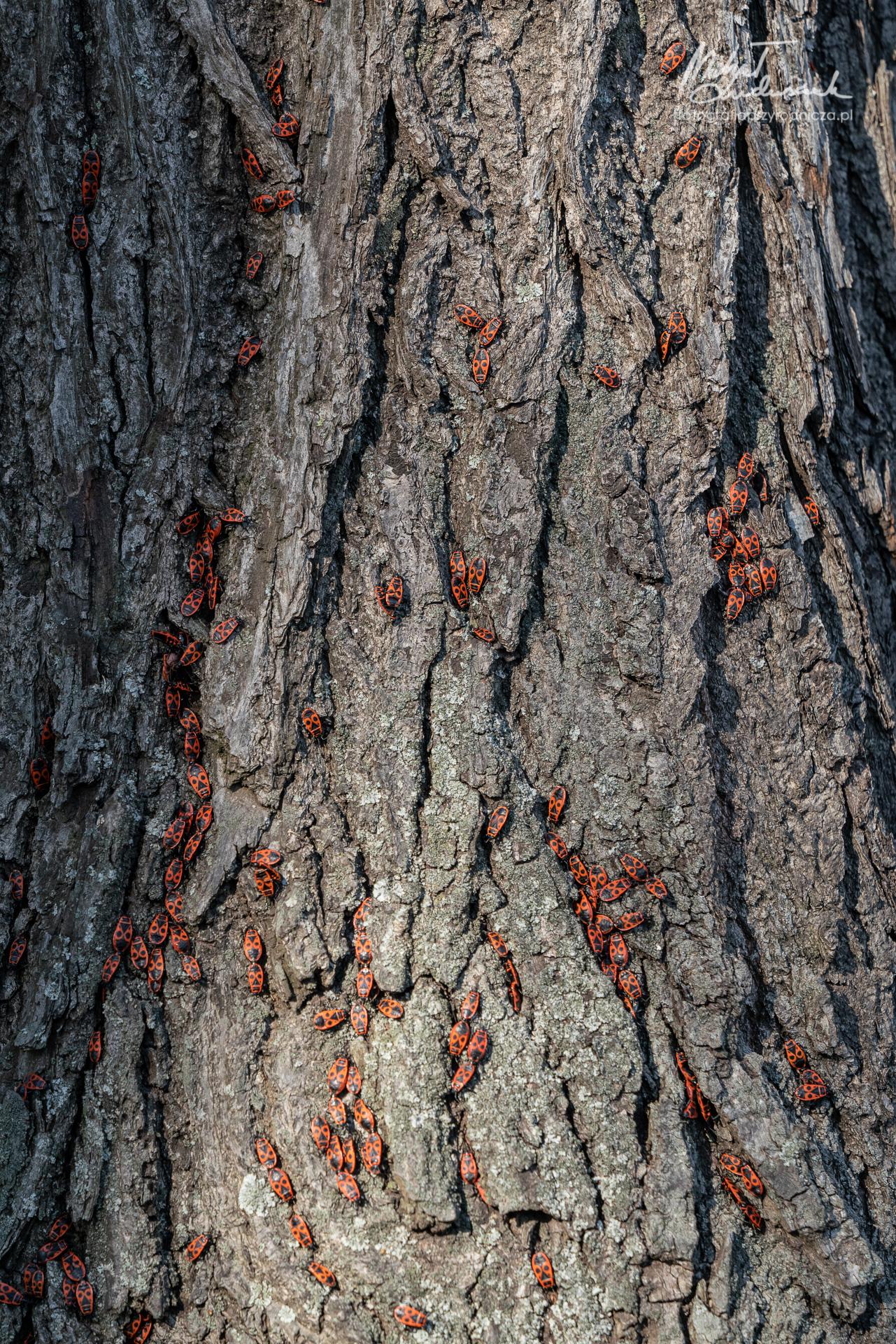 Kowale wygrzewają się na korze drzewa
