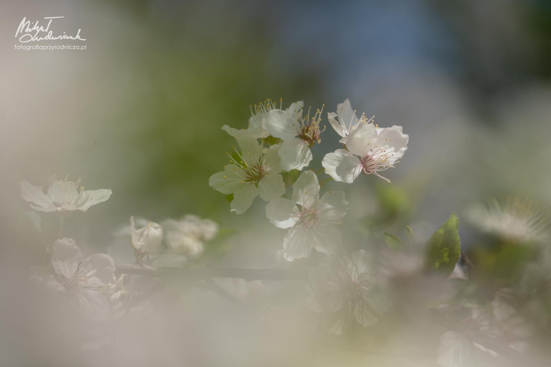 Wiosenne kwiecie