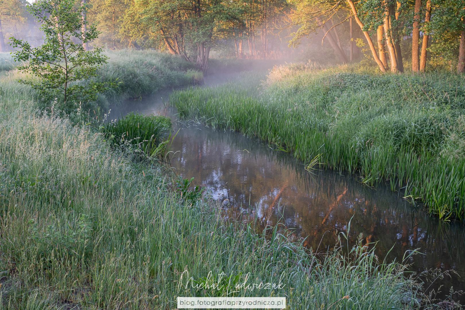 Rzeka Grabia