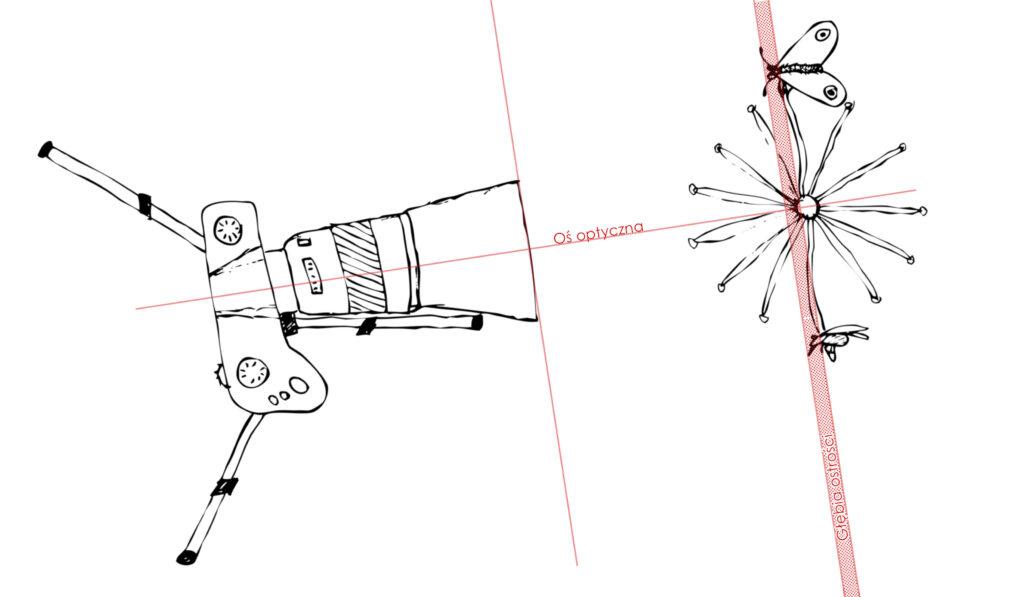 Zachowana płytka głębia, ale przez przemieszczenie aparatu udało się głowy obu owadów pokazać jako ostre